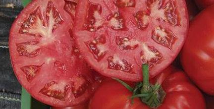 Beefsteak Tomato- Country Taste