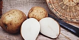 Early White Seed Potatoes- Onaway