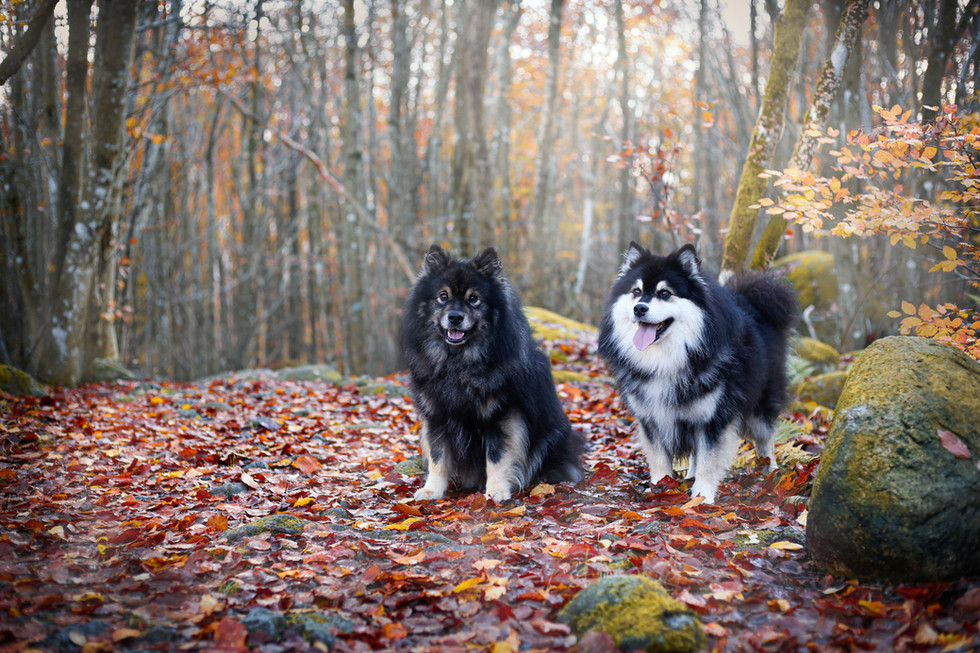 Hunder, reklame-6189 - uten bånd.jpg