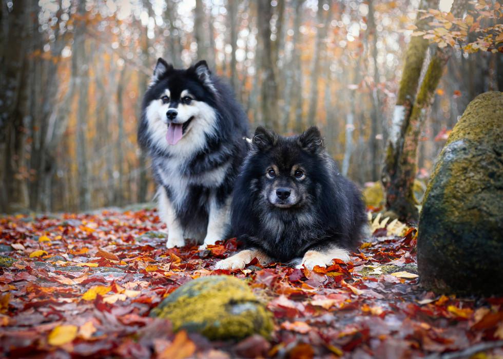 Hunder, reklame-6224-uten bånd.jpg