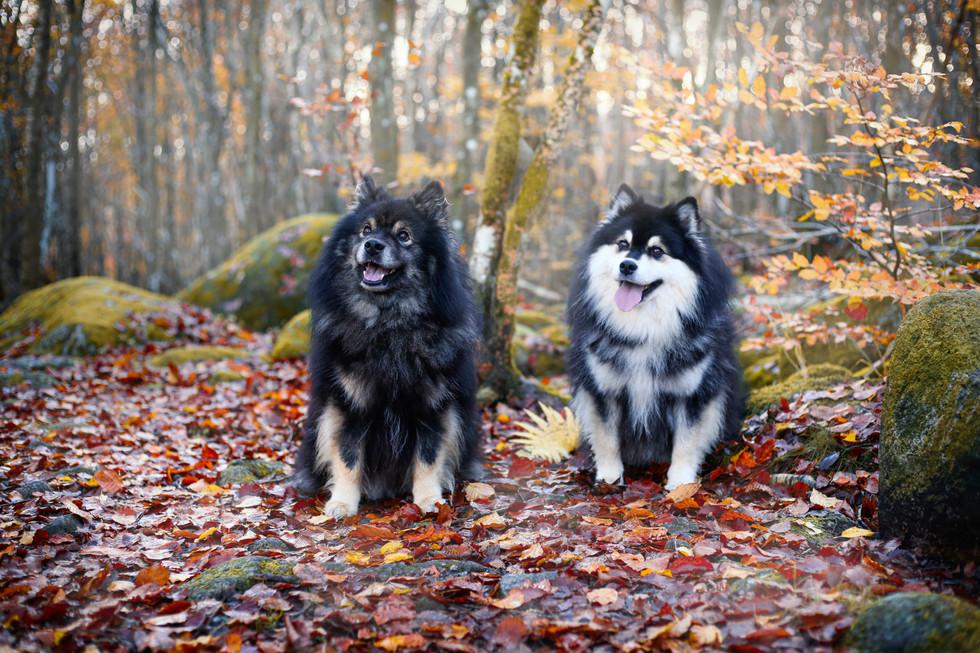 Hunder, reklame-6184- uten bånd.jpg
