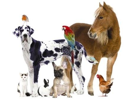 Emotionscode/Bodycode Sitzung für Tiere