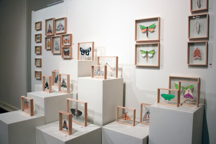 MOTH, Moth Specimen Artworks, Chelsea Ho