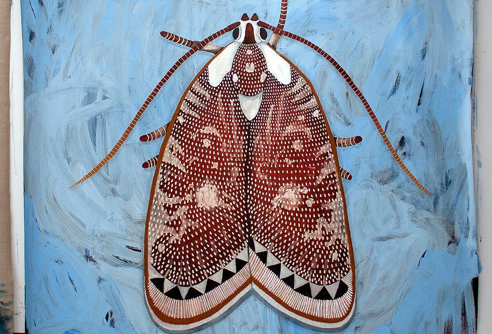 Euchaetus species