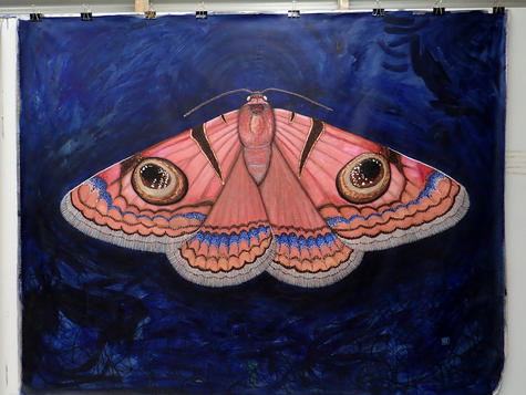 Niguza eucesta, Owlet moth, Chelsea Hopk