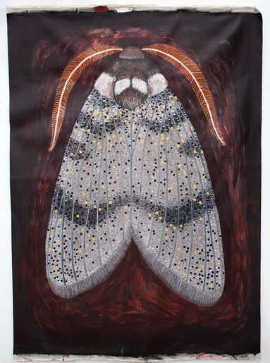 Oenosandra boisduvalii, Boisduvals Autumn Moth - MALE