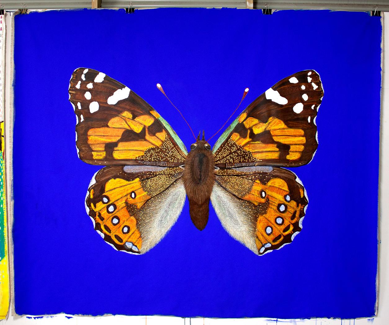 Vanessa kershawi, Australian Painted Lady Butterfly