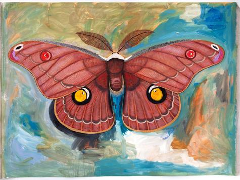 Helena Gum Moth - Chelsea Hopkins-Allan,