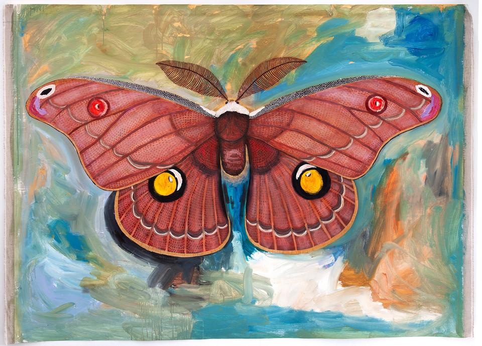 Helena Gum Moth, Opodiphera helena