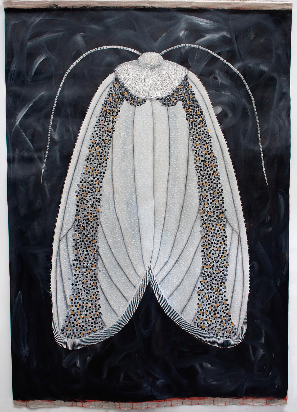 Oenosandra boisduvalii, Boisduval's Autumn Moth - FEMALE