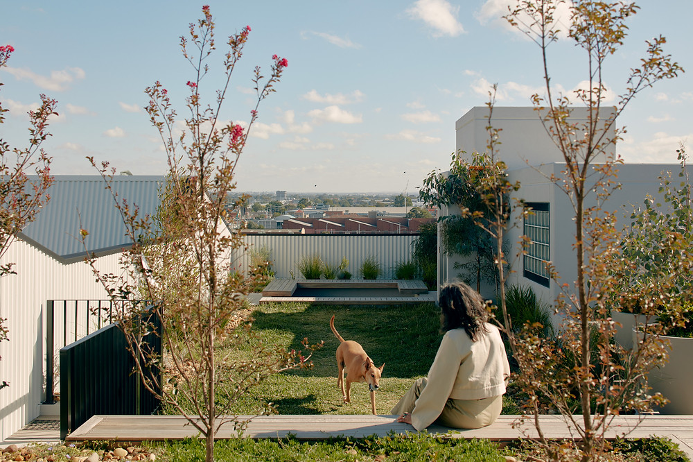 Project: Breese Street, Brunswick by Milieu, architecture by Breathe Architecture and DKO, photography by Tom Ross - woman playing with dog on roof top
