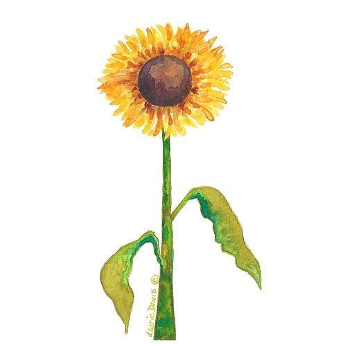 Summer Sunflower - 5 Card Set