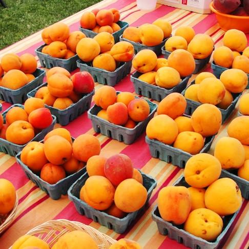 Afandou Great Apricot Festival 2014!