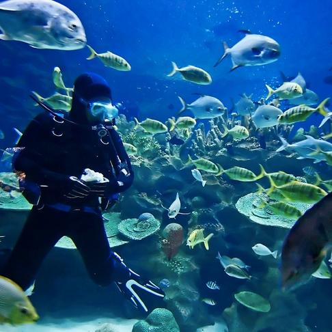 Scuba Diving in Rhodes!
