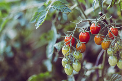 agriculture-blurred-background-close-up-