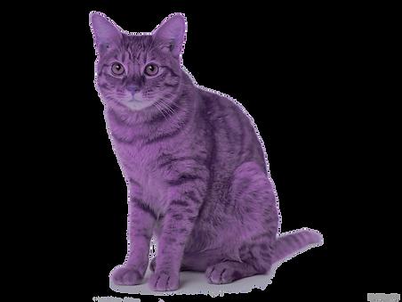 purpcat.png