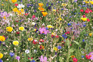 beautiful colorful meadow of wild flower