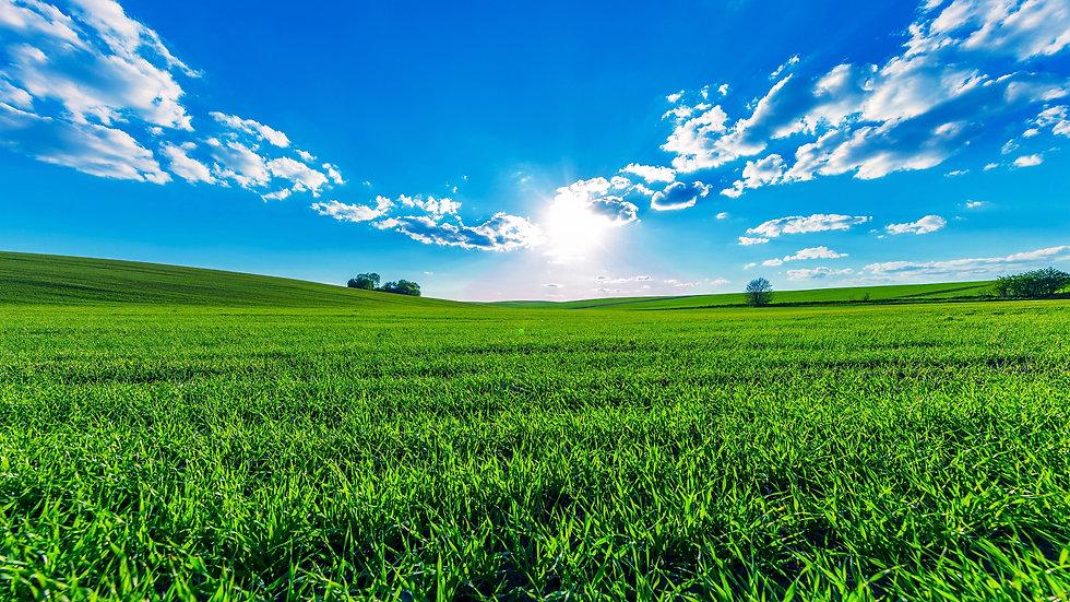 Green-fields.jpg
