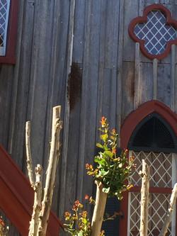 Bee Swarm on Church