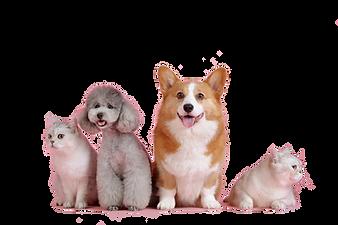 pets-3715733_1920.png