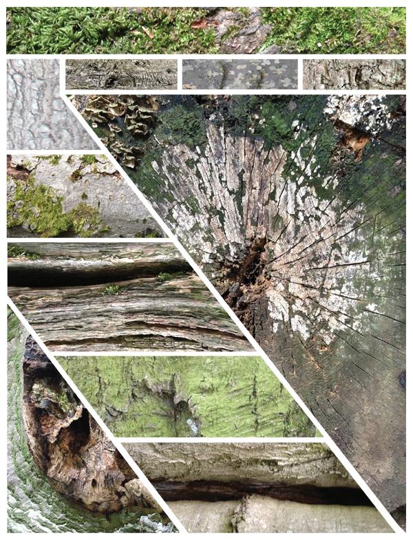 Bark and stem