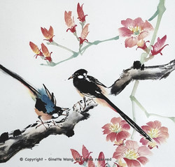 Taiwanese Blue Magpies