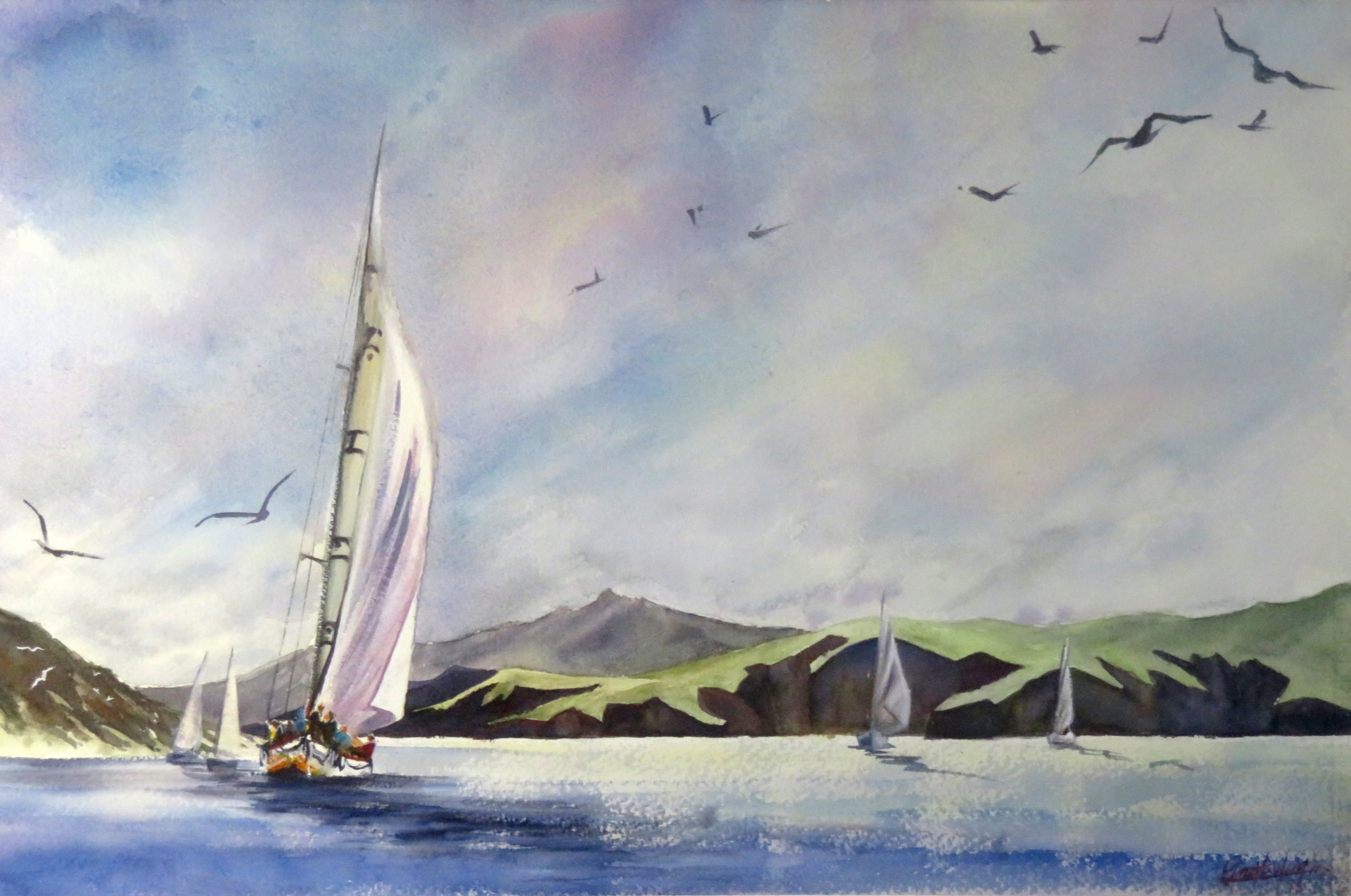 Sailing in Auckland