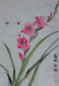 Sword orchid
