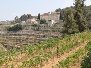 Destroyed Vineyards