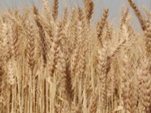 Separating Wheat and Chaff