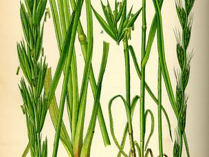 Sowing Weeds