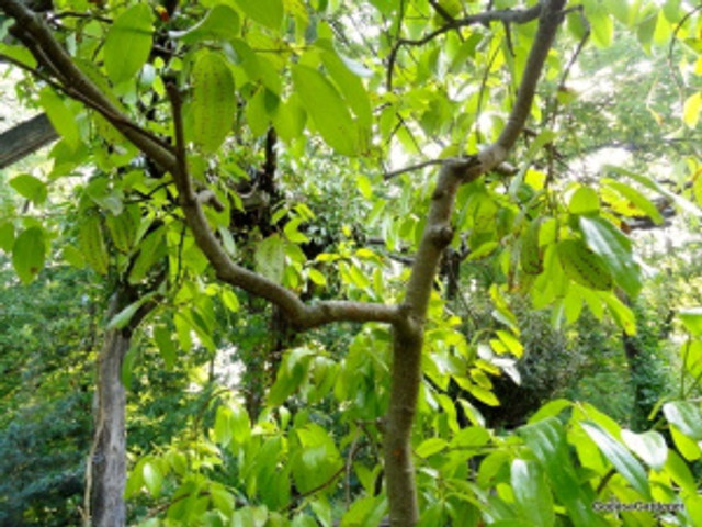 Bark, Cheekwood Garden