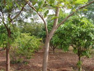 Praising God – Algum wood
