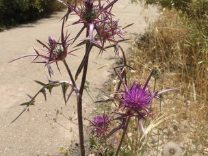 Cowards Punished with Thistles