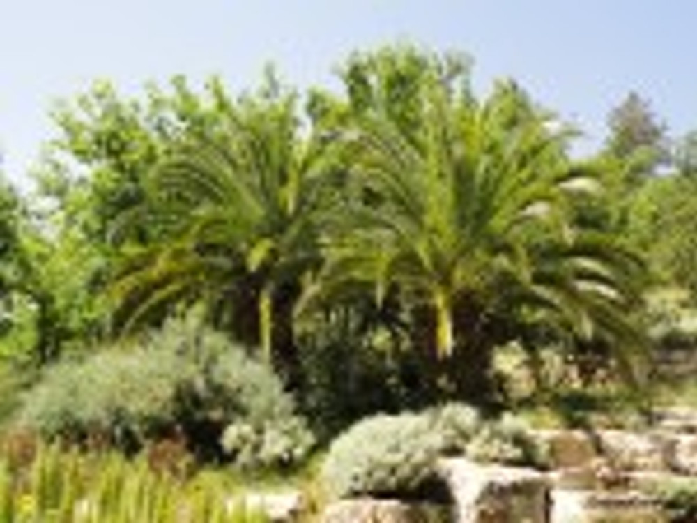 Palm trees, JBG