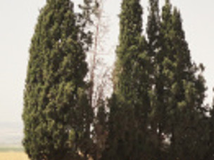 Ark of Cypress Wood