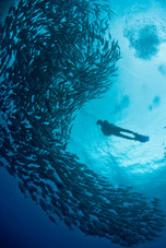 diver-with-fish-shoal-P62FXMQ.jpg