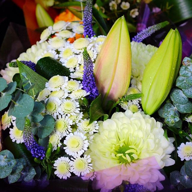 Beautiful Blooms 💜.jpg