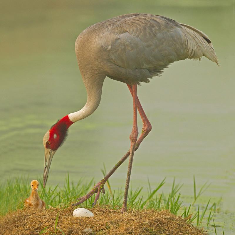 Dhanauri Wetlands