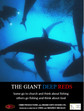 The Giant Deep Reds