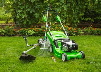 Lawn Maintenance Toadflax.jpg