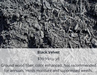 Black Velvet (1).png