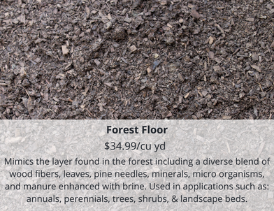 Forest Floor.png