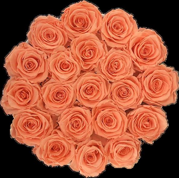 FlowerBox / Pêche / Moyenne