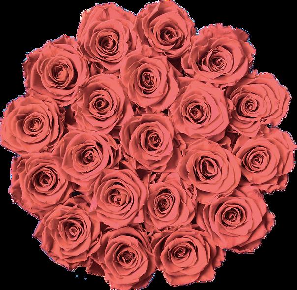 FlowerBox / Rose Nectar / Moyenne