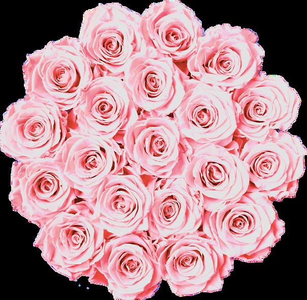 FlowerBox / Rose Baby / Moyenne