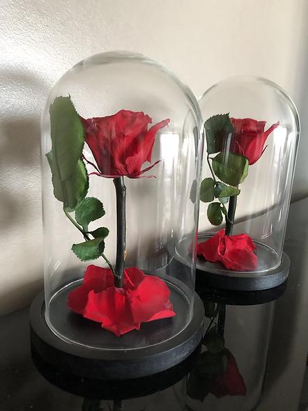 Rose Sous Cloche