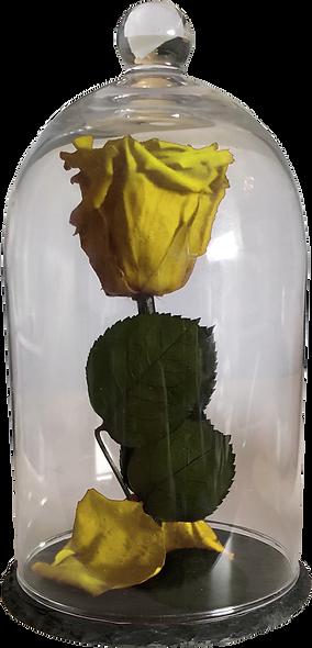 Rose Sous Cloche / Jaune Canari / M