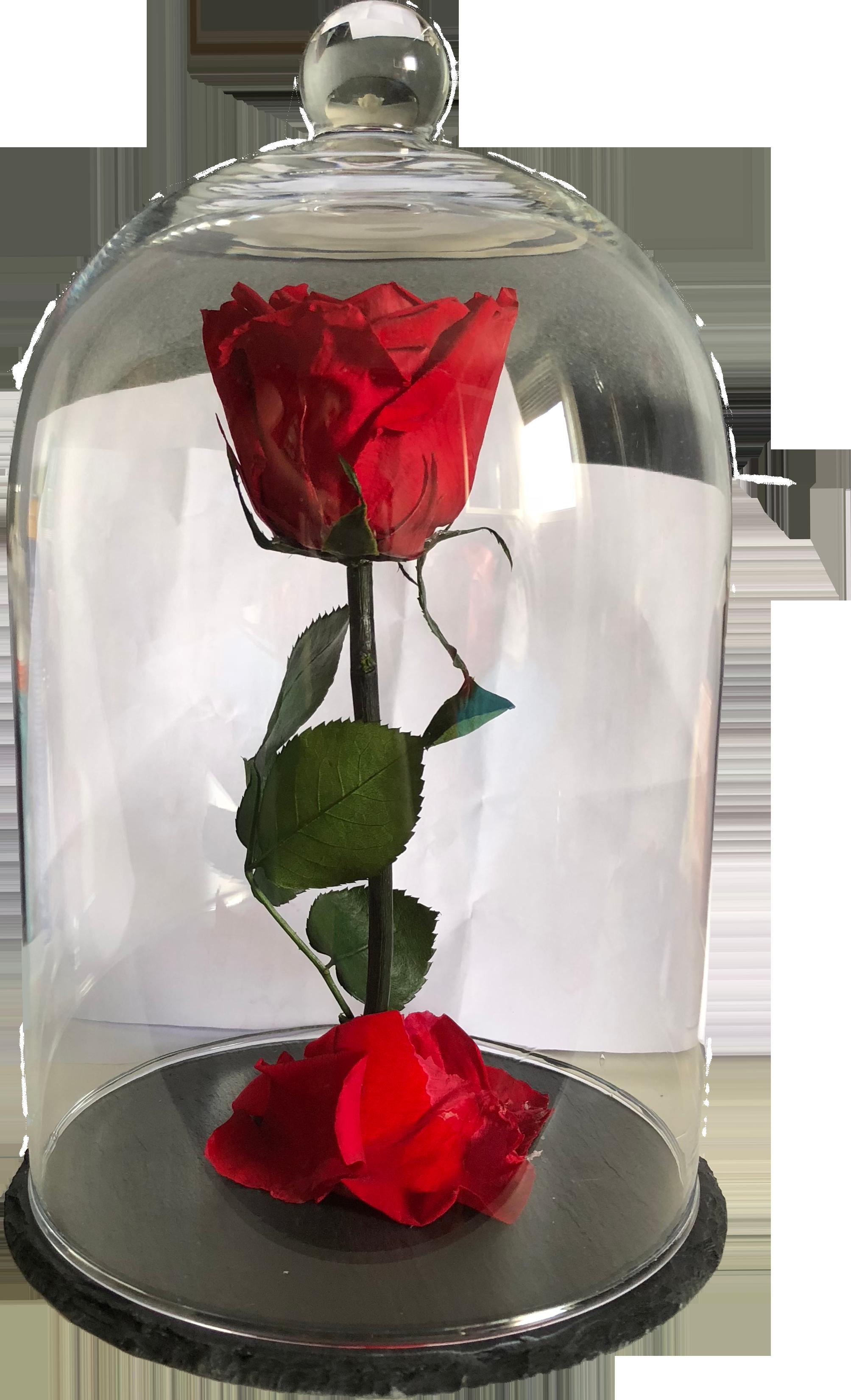 Rose Sous Cloche Rouge Xl
