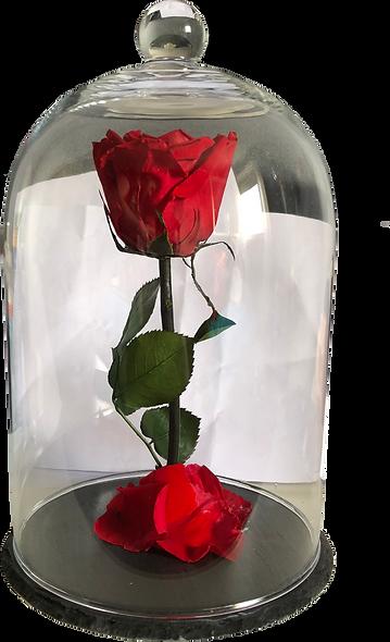 Rose Sous Cloche / Rouge / XL